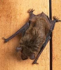 bat in an RV