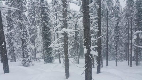 almost-knee-deep-powder-March-16